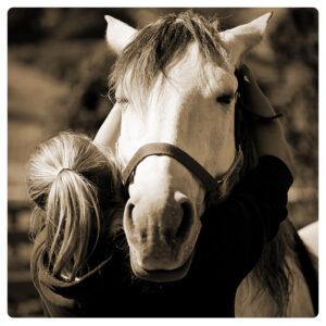 TBA 2022 Advanced Animal Level 2 Equine Intensive & Farm Animals